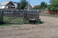 Altaj-2017-10